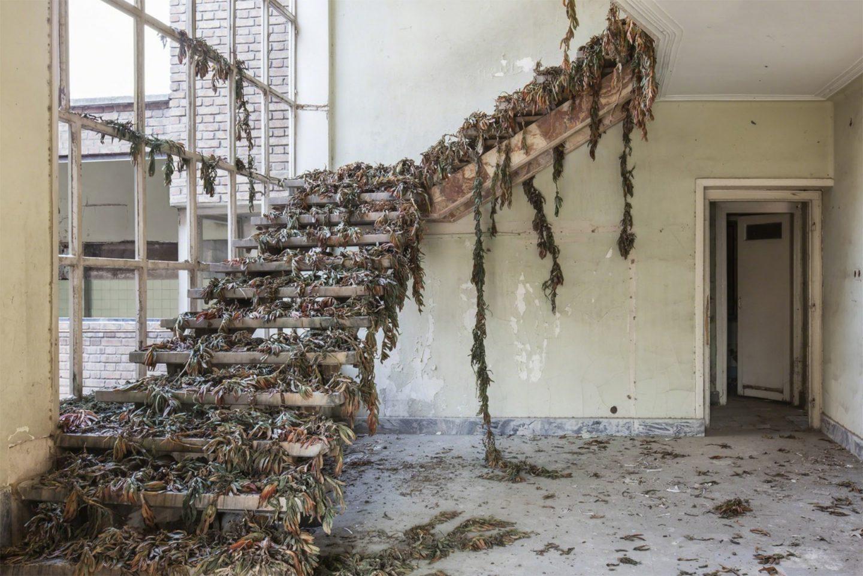 escada com plantas sobre ela