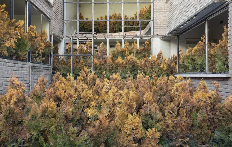 casa cheia de pinheiros envelhecidos